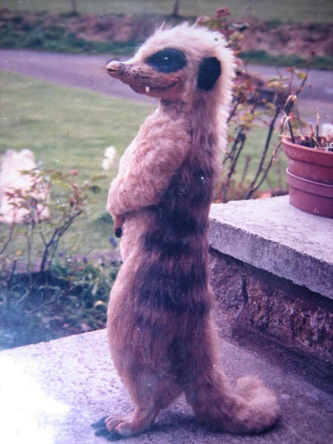 Meerkat 1989