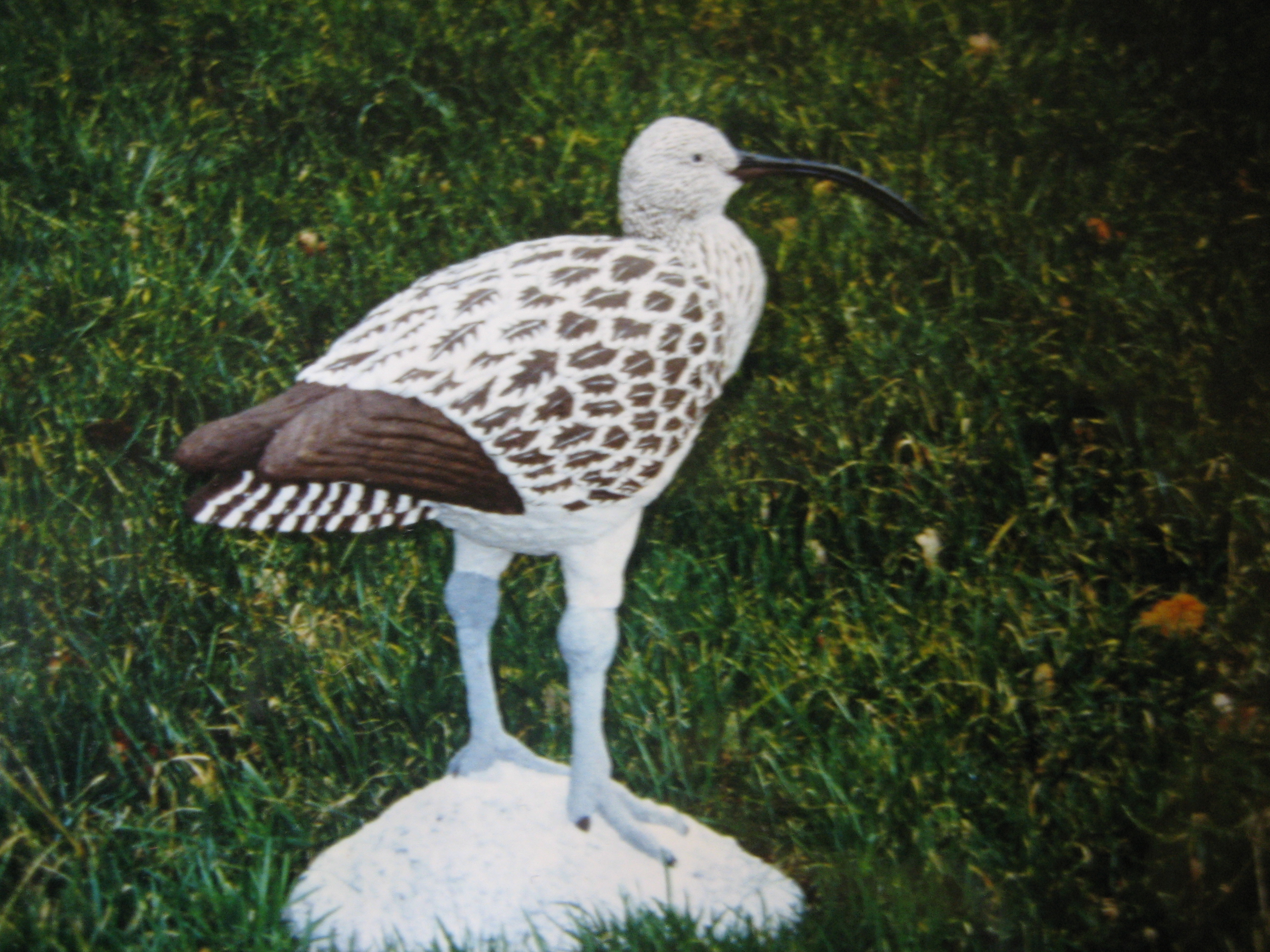 Curlew 1991