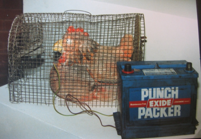 'Battery Chicken' 1988